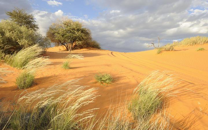 Kalahari Sanddüne in der Nördlichen Kapprovinz von Südafrika © WOLF AVNI / Shutterstock.com