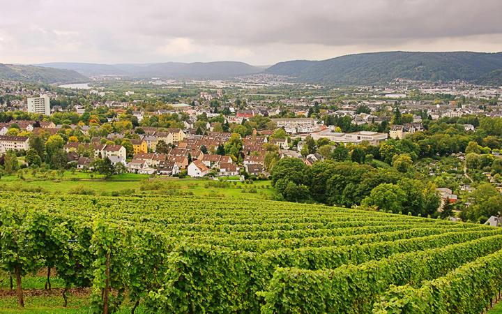 Weinberge von Trier © LianeM / shutterstock.com
