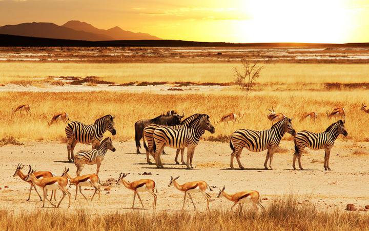 Safari im Etosha-Nationalpark im Norden von Namibia © Galyna Andrushko / Shutterstock.com