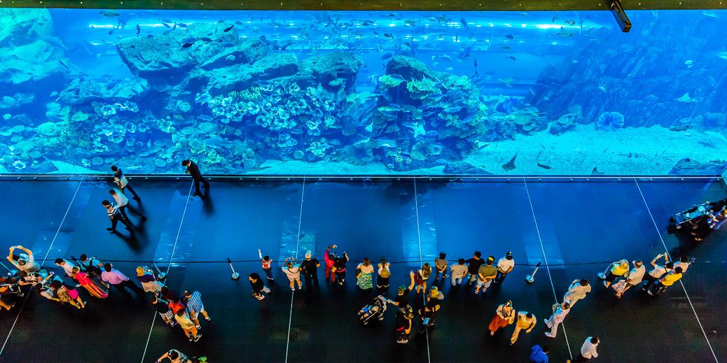 Das riesige Aquarium der Dubai Mall © S-F / Shutterstock.com